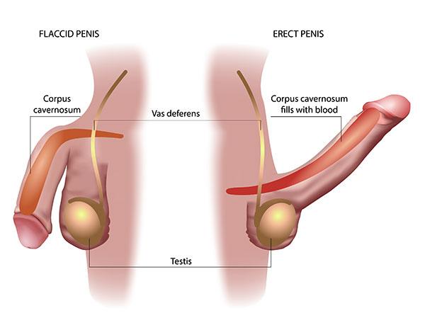 disfunkcija erekcije